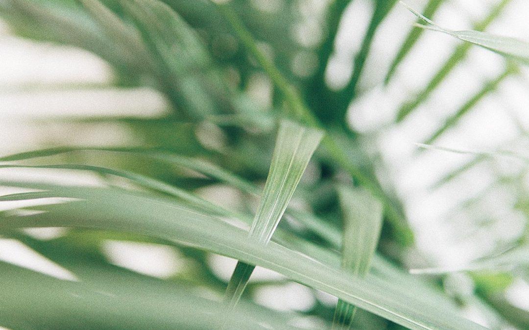 TOP 10: Rośliny, które poprawią jakość powietrza, którym oddychasz