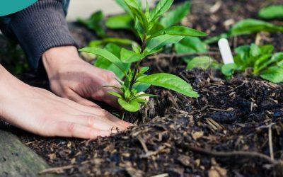 #19. Jak zbudować ogród, mając ograniczony budżet?