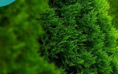 #20. Rośliny iglaste w naszych ogrodach- jak je pielęgnować i uprawiać z sukcesem?