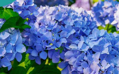 #22. Krzewy liściaste- jak je uprawiać i pielęgnować z sukcesem.